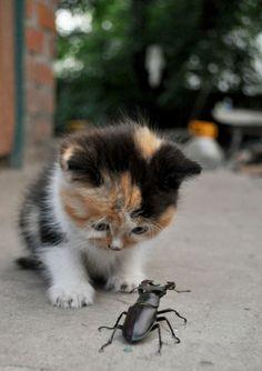 """It's a Monster… Mommy!!"" Photo via Imgur"