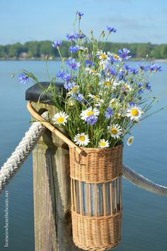 Basket of Ox-eye Daisy and Bachelor Buttons on dock Love Flowers, My Flower, Flower Power, Wild Flowers, Beautiful Flowers, Beautiful Pictures, May Celebrations, May Day Baskets, Bachelor Buttons