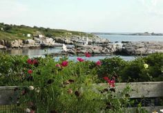 Celia Thaxter's Garden on Appledore Island, Maine - take mom there next summer