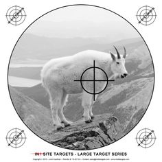 Pistol & Rifle The targets listed here are suited to pistol and rifle. Blow Dart, Paper Shooting Targets, 22lr, Shooting Sports, Darts, Archery, Arrows, Hunting, Fishing
