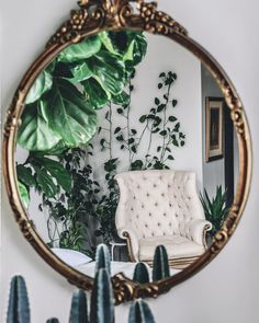 plants reflected in mirror