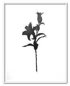 FLEUR 2 - 2015 - Graphite 6B sur papier - (65 x 50 cm)