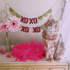 #Cats  #Cat  #Kittens  #Kitten  #Kitty  #Pets  #Pet  #Meow  #Moe  #CuteCats  #CuteCat #CuteKittens #CuteKitten #MeowMoe      Xo, xo, give meh food ...   https://www.meowmoe.com/52381/
