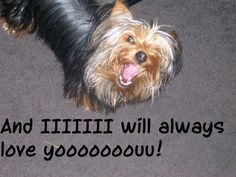funny yorkie signs
