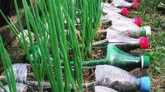 17 Idées Géniales Pour Réutiliser les Bouteilles en Plastique.