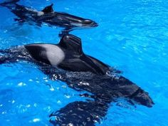 Free Willy, Seaworld Orlando, Killer Whales, Sea World, All Pictures, Dolphins, Animals And Pets, Gallery, Bff