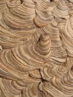 Close up details of a wasp nest ~ a work of art!