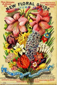 1898 Floral Guide Vintage Flowers Seed Packet Catalogue Advertisement Poster | eBay