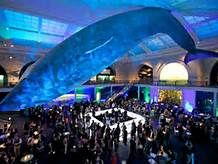 natural history museum new york - Bing Images
