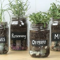 WEBSTA @ goodful - You can make an indoor herb garden using old jars ✨! Link to full instructions in our bio!