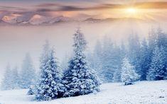 #nature #winter