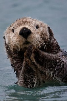 Sea Otter Portrait Photograph by Brian Ray