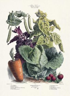 Paintings of Vegetable Gardens | Vilmorin, The Vegetable Garden