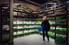 Depois de Berlim, a cidade da vez a ganhar uma estufa para vendas de ervas frescas e temperos, é Amsterdã.
