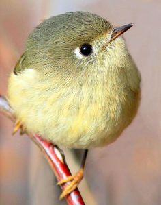 Trendy Ideas For Photography Nature Birds Animals Cute Birds, Pretty Birds, Small Birds, Little Birds, Colorful Birds, Beautiful Birds, Animals Beautiful, Cute Animals, Wild Animals