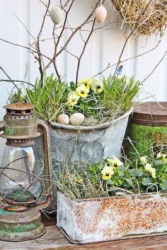 Spring flowers in galvanized buckets