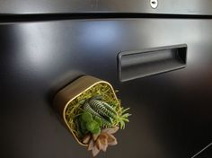 Perfect gift for any plant lover to bring adorable plants into their office space! Display on any magnetic metal surface.