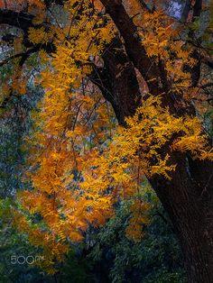 Boyce Thompson Arboretum Fall by Daniel Marz on 500px