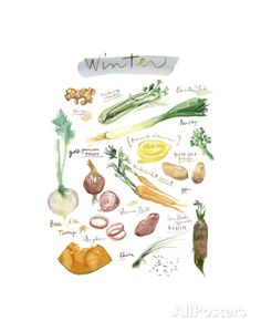 Winter Vegetables Posters by Lucile Prache at AllPosters.com
