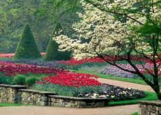 Longwood Gardens, Kennett Square, PA in Spring... bold tulips, evergreens and white-flowering dogwood tree.