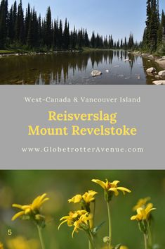 Rondreis West-Canada & Vancouver Island (23 dagen). Mount Revelstoke National Park en omgeving. Dag 5! - Revelstoke Courthouse - Revelstoke Mountain Resort - Rit op de Pipe Mountain Coaster - Meadows in the Sky Parkway - Overnachting: Martha Creek Provincial Park #MountRevelstoke #Canada #Revelstoke #Reisverslag Revelstoke Bc, Mountain Resort, Vancouver Island, Resorts, Coaster, Canada, Sky, Majorca, Heaven