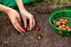 Plant Those Fall Bulbs for Spring Flowers | HGTV >> http://www.hgtv.com/design-blog/how-to/tips---tricks-to-get-your-house-ready-for-fall?soc=pinterest