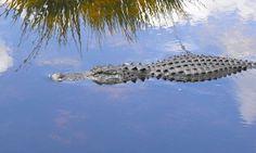 No te pierdas el Parque Nacional de los Everglades: te contamos todo lo que hay que saber sobre una de las excursiones imprescindibles si se viaja a Miami