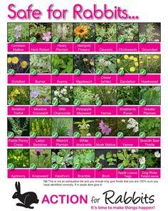 SAFE plants for Rabbits, bunnies, poster via www.actionforrabbits.co.uk