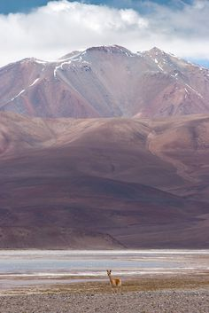 Monte Pissis, Catamarca, #Argentina Water For Health, Places Worth Visiting, South America Travel, What A Wonderful World, Central America, Amazing Nature, Beautiful Landscapes, Wonders Of The World, Viajes