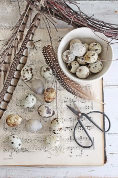 Cottage Charm ~ birds and nest, neutrals ~ VIBEKE DESIGN: Are you ready for spring inspiration? Egg Nest, Vibeke Design, Quail Eggs, Nature Collection, Bird Cages, Hello Spring, Natural Materials, Bird Feathers, Brown And Grey