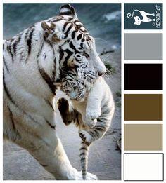 White tiger - Slate, blue, grey, black, white, coffee, brown - Designcat Colour Inspiration Pallet