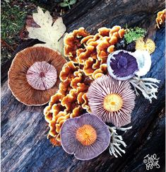 The Magical Beauty Of Mushrooms Captured By Jill Bliss In 10+ Colorful Photos