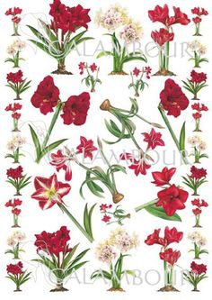 #FLOWER #DESIGN #CHRISTMAS #DECOUPAGE #PAPER EASY - 141   Details: measures 50 x 70 cm, printing on 60 gr/mq paper sheet