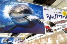 電車の車両内の中吊りポスター。いつもあまり気にも留めないが、これは思わず二度見した。 「サメが広告を食べてる!!」 Poster Layout, Art Tips, Sign Design, Visual Merchandising, Cool Designs, Advertising, Banner, Graphic Design, Trick Art