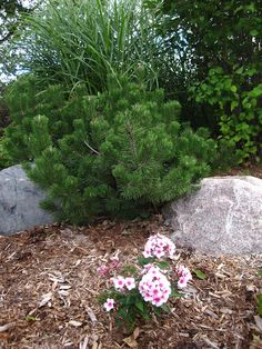 Blooms on Mound #4