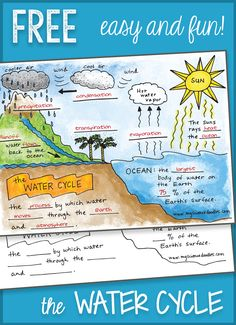 Free Water Cycle interactive notebook