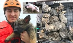 Josiah Meharg, a Texas Army National Guard member, brought joy to the world when he shared a photo album to Imgur of animals he rescued from Harvey.