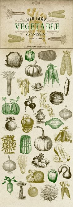 Vintage Vegetable Garden Graphics by Eclectic Anthology on Creative Market