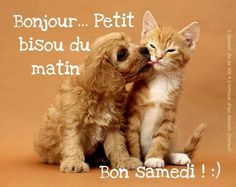 Amour Éternel, Happy Saturday Morning, Good Morning Saturday, Alcohol Intoxication, Handsome Quotes, Animaux