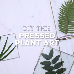 DIY Pressed Plant Hanging Garden