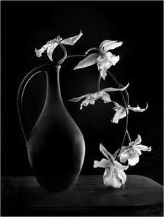 ☾ Midnight Dreams ☽  dreamy & dramatic black and white photography - night orchids