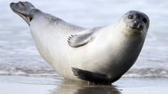harbor/seal - Google Search