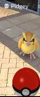 Pidgey outside Blanchardstown Library Tweety, The Outsiders, Character, Lettering