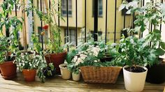 urbangarden - 5 easy plants you can't live without