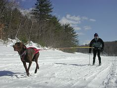 Skijoring..would love to try this with one of my dogs.......right