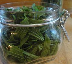 Jitrocel je jedna znejznámějších a nejpoužívanějších bylinek. Zkusme si připravit zdravý sirup, anebo léčivou pleťovou vodu.  Sirup zlihového extraktu jitrocele kopinatého se doporučuje při dráždivém kašli:  30g zpola usušených listů rozkrájíme a zalijeme 25 g čist Dieta Detox, Nordic Interior, Keeping Healthy, Health Advice, Natural Medicine, Organic Beauty, Green Beans, Cucumber, Natural Remedies