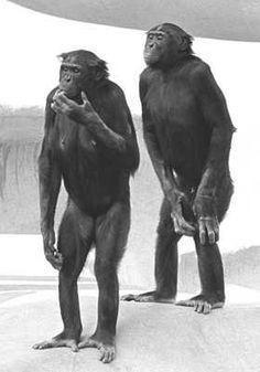 chimp3.jpg (280×400)