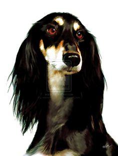 Dog - Saluki by *wolverine041269 on deviantART