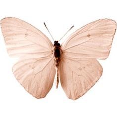 P Moth Decorator Butterfly Photography-...