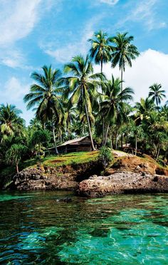 New Guinea #travel #junkydotcom #sea #palm